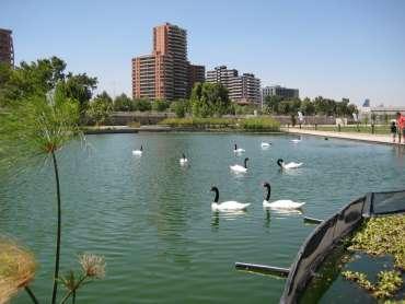 Parque bicentenario fauna nativa
