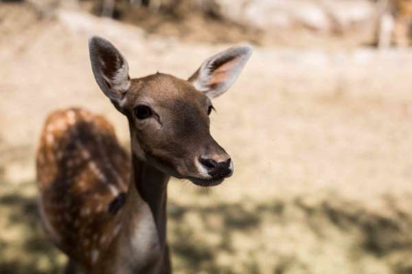 Lampa Zoo, panorama para niños en un entorno natural