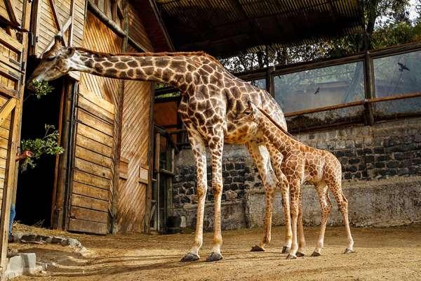 Zoo Metropolitano, naturaleza y animales en familia.